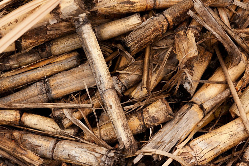 Biomass energy generation